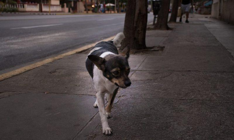 Stray dogs - intersting thing in Cuba