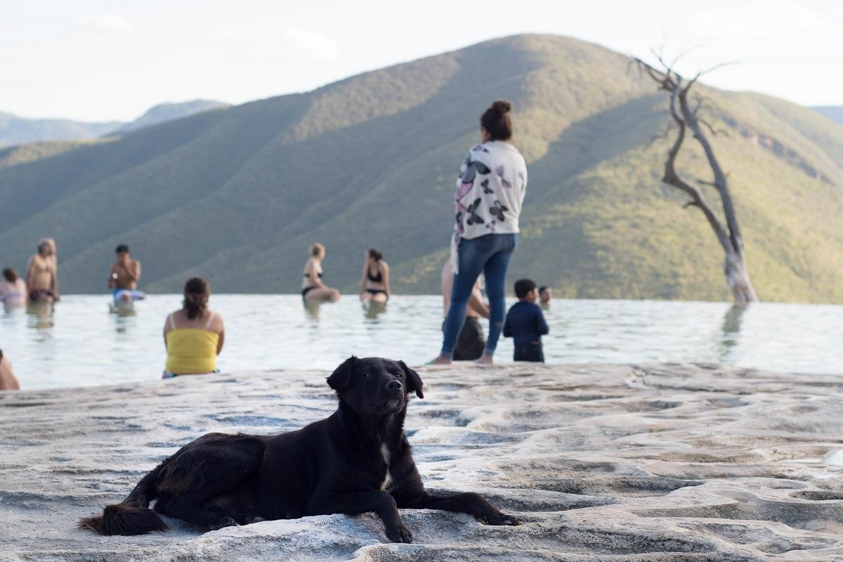 Black dog in front of the natural infinity pool in Hierve al Agua, Mexico