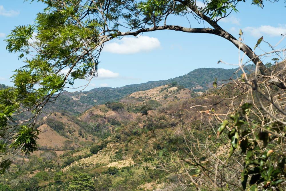 Pogled na polja kav in koruze