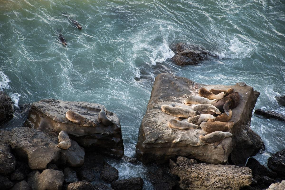 A family of sea lions resting on a rock (Watch sea lions and penguins in Patagonia for free)