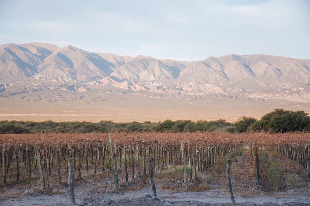 Degustacije vin v Argentin - pogled na vinograd in gore za njim