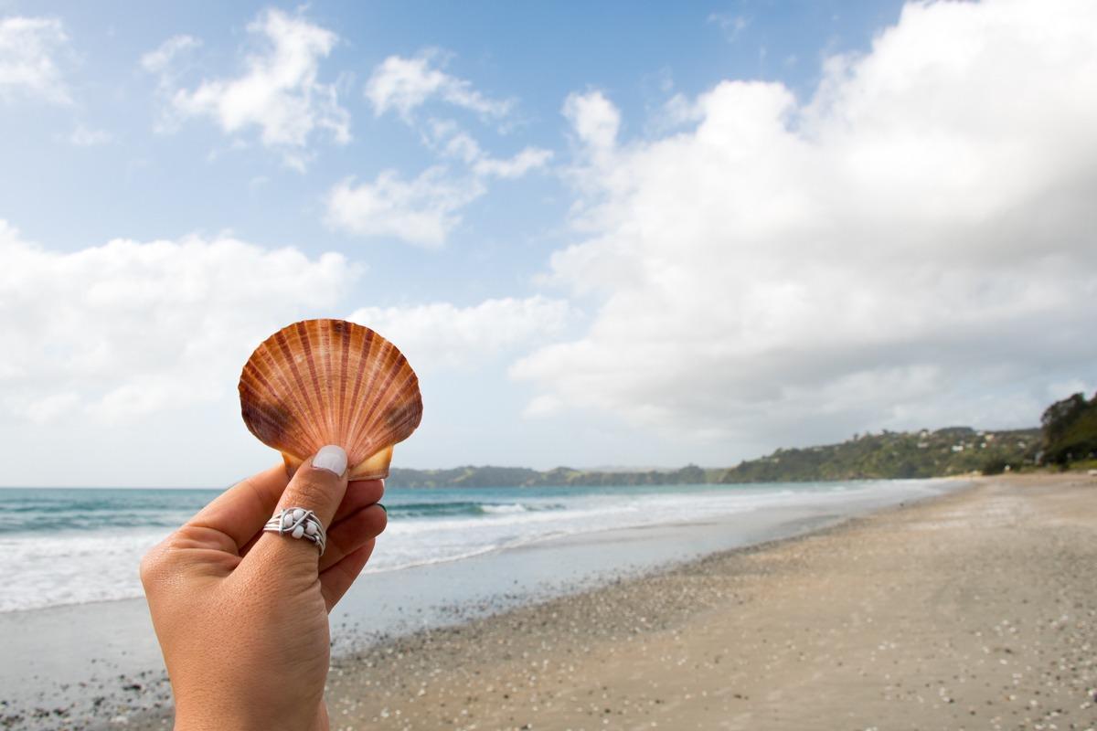 Roka, ki drži školjko, v ozadju plaža in ocean (vreme - Potepuški nasveti za Novo Zelandijo)