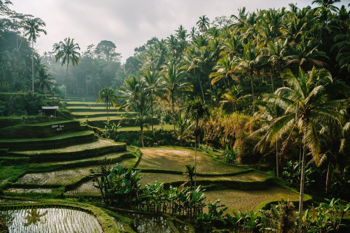 Riževe terase Tegalalang (ena izmed idej za izlete iz Ubuda)