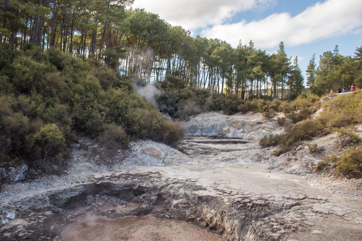 Blatni vrelec v geotermalnem parku (Potepuški nasveti za Novo Zelandijo)