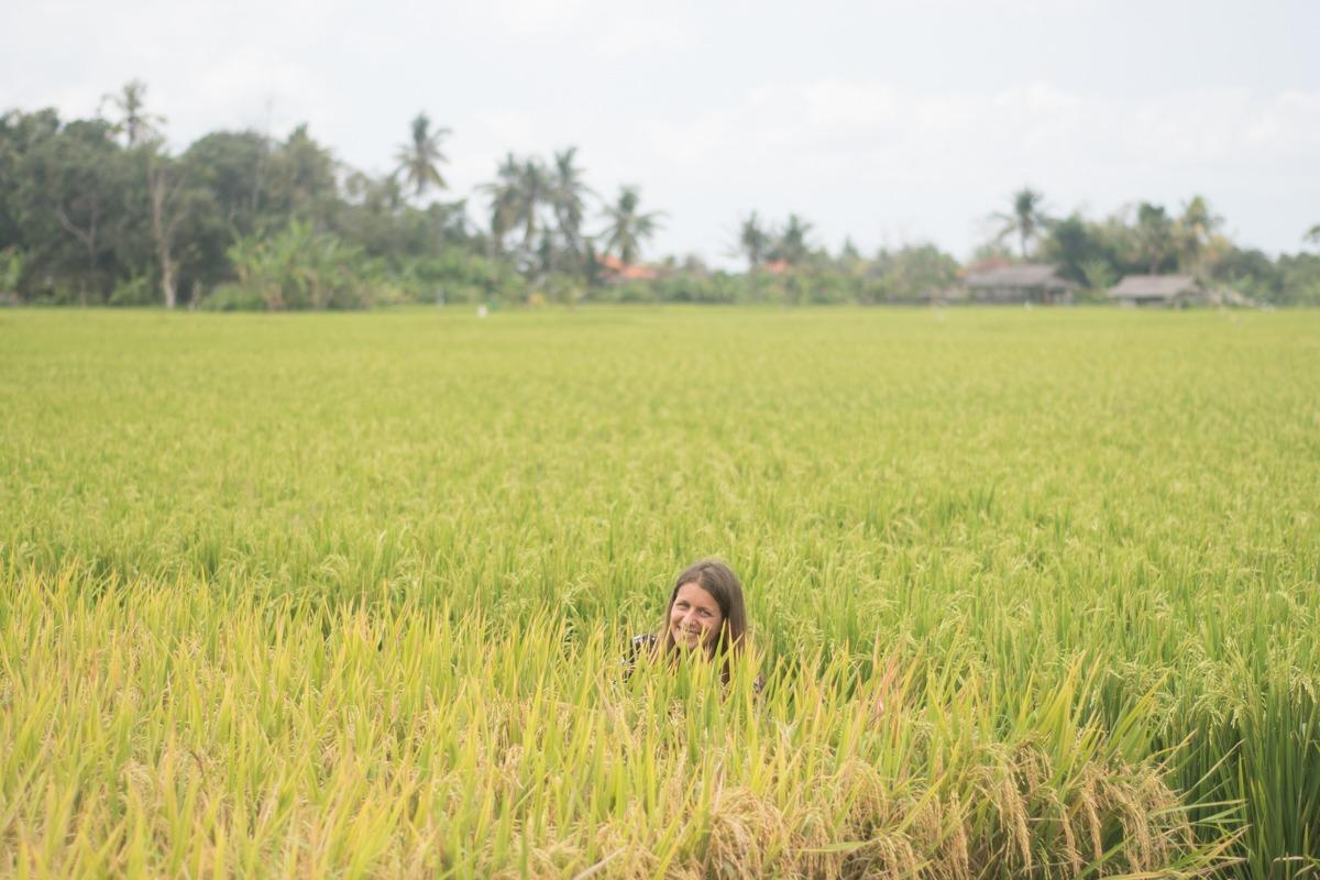 Sandra, looking out from the Rice fields in Bali (our yearlong honeymoon)
