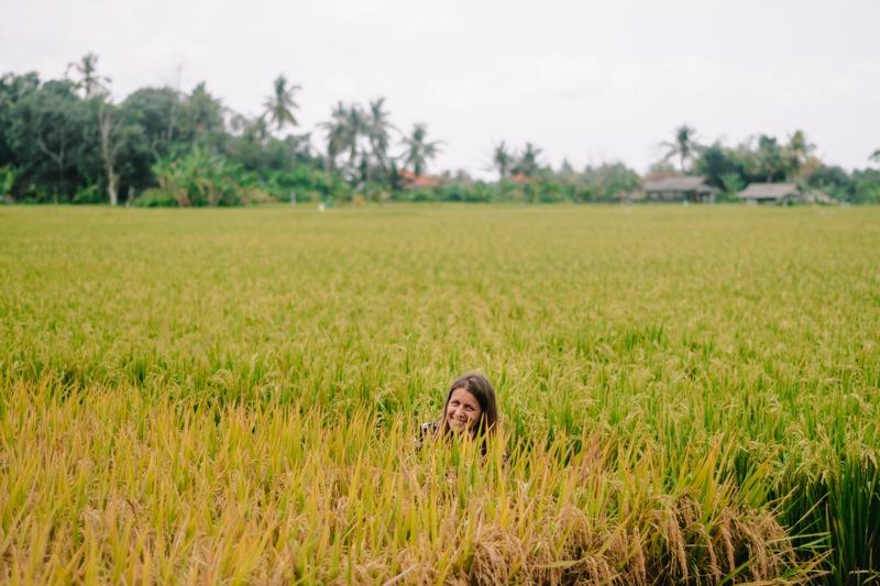 Smejoča se glava, ki gleda iz riževega klasja