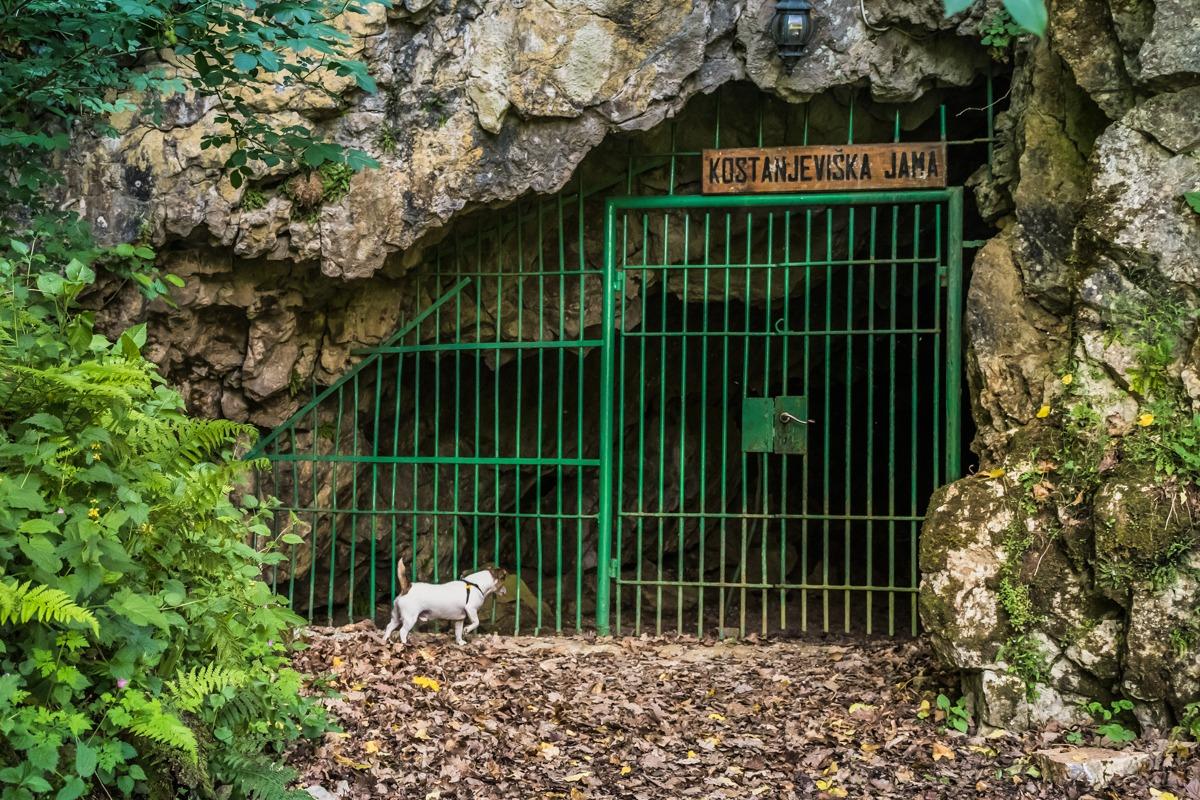 Vhod v Kostanjeviško jamo