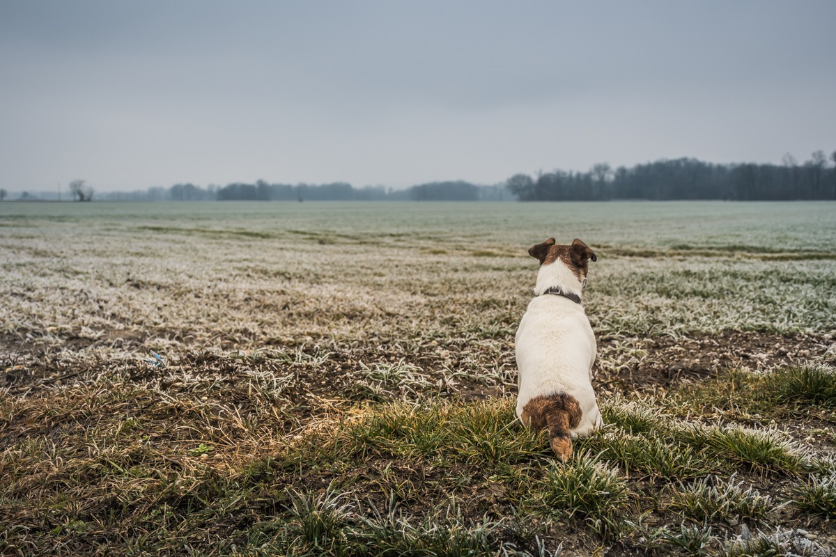 Foggy Prekmurje region - little white dog staring in the foggy distance