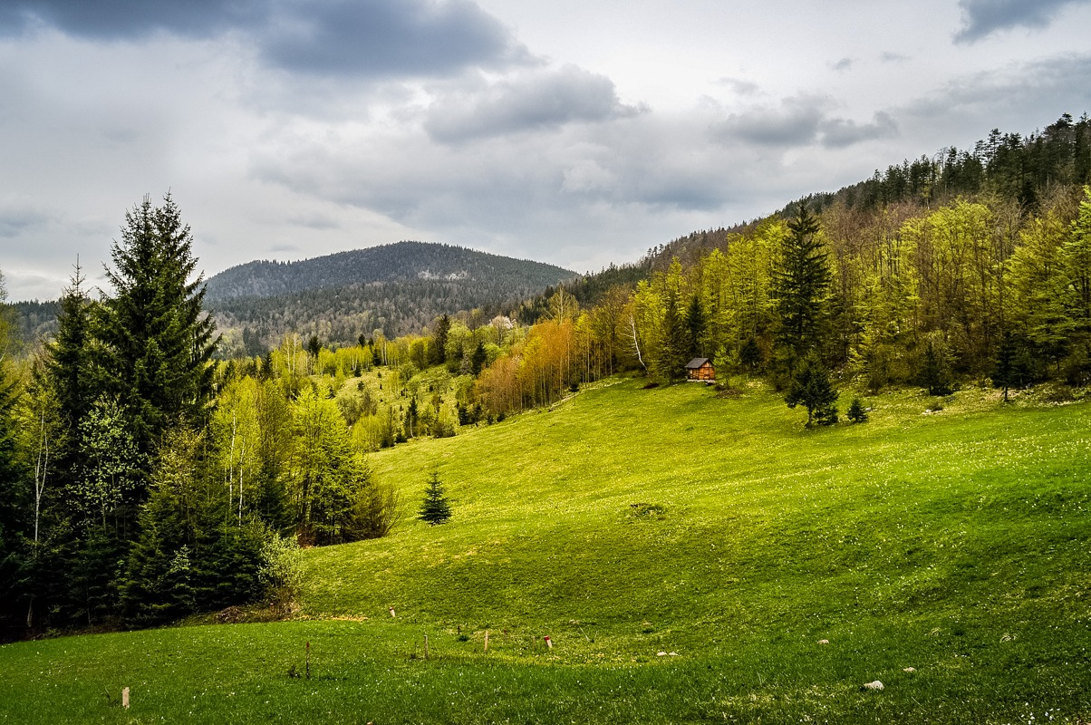 Wood and meadow on Tara mountain in Serbia