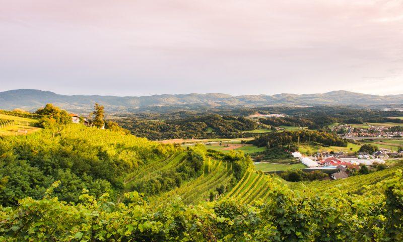 Znamenitosti Dolenjske - razgled s Trške gore na vinograde
