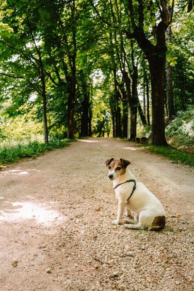 Kettejev drevored v Novem mestu - ena izmed znamenitosti Dolenjske